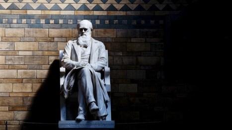 La teoría de la Evolución, explicada para principiantes | Educacion, ecologia y TIC | Scoop.it