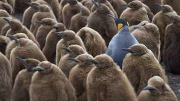Groupthink: avoid the drive to conformity | Coaching Leaders | Scoop.it