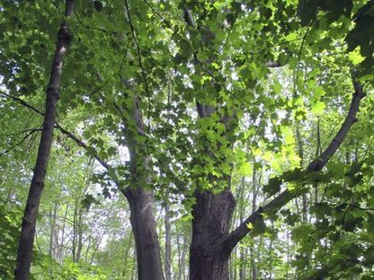 Three investment lessons from the trees | Timberland Investment | Scoop.it
