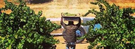 Convicts Do Time in the Vineyard | Wine News & Features | Quirky wine & spirit articles from VINGLISH | Scoop.it