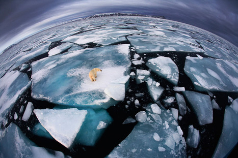 Wildlife Photographer of the Year 2012   omnia mea mecum fero   Scoop.it