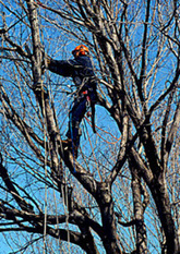 How to Select an Arborist or Tree Service - NYS Dept. of Environmental Conservation | Certified Arborist in Atlanta | Scoop.it