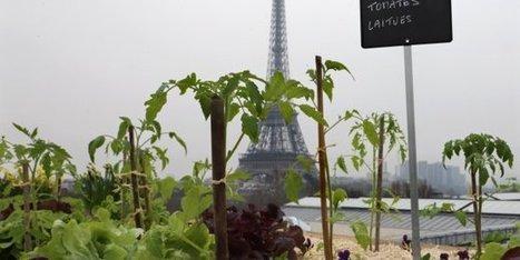 Réintroduire la nature en ville, le nouveau défi des urbanistes   Jardins urbains   Scoop.it
