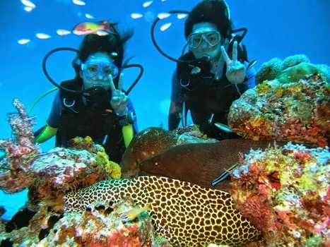 Read Latest Information about destination: Maldives Liveaboard Diving: Experience of a Lifetime | Water Boats | Scoop.it