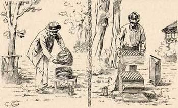 Histoire de l'apiculture | Abeilles, intoxications et informations | Scoop.it