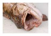 Fukushima fish still radioactive | Autres Vérités | Scoop.it