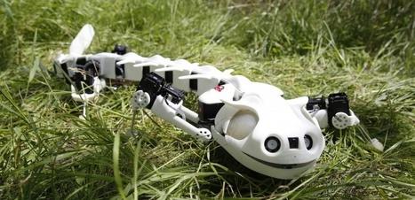 SUISSE. Un robot salamandre imprimé en 3D | Post-Sapiens, les êtres technologiques | Scoop.it