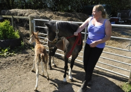 Pony sanctuary marks one year with open day - Hemel Gazette | Animal Rescue Web Digest | Scoop.it