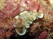 Sea Slug Census in Port Stephens - ABC Online (blog) | Amocean OceanScoops | Scoop.it