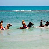 10 Things to Do on Jamaica | Travel | Scoop.it