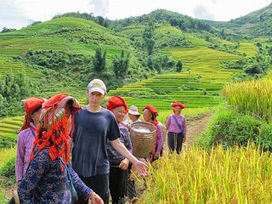 Sapa Vietnam charming terraced rice season nine | Sapa Trekking tours | Sapa Tours with Asia Charm Tours | Scoop.it