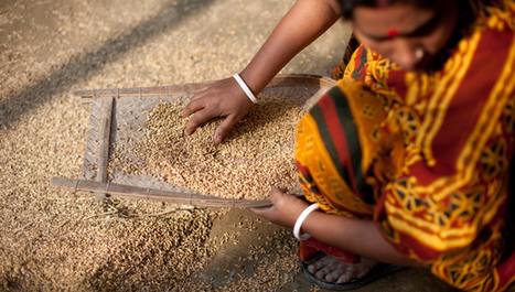 Nanoparticles from rice husks set for use in batteries | Rice husk pellet - briquette | Scoop.it