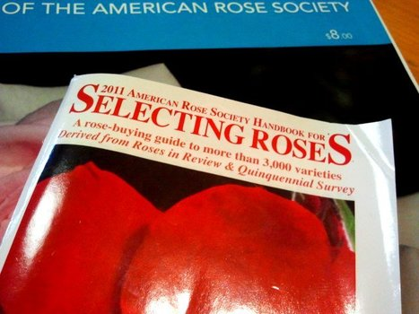 Guides For SelectingRoses   Annie Haven   Haven Brand   Scoop.it