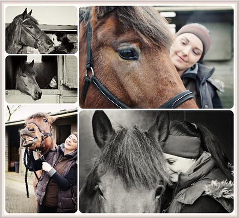 Equine Photoshoot   HorsesOne   Scoop.it