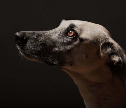 #What #Dog #is#Thinking | Le It e Amo ✪ | Scoop.it