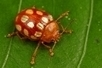 Des centaines d'espèces découvertes au Suriname | Esprit libre | Scoop.it