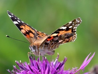 Butterfly Conservation - Jobs | Conservation | Scoop.it