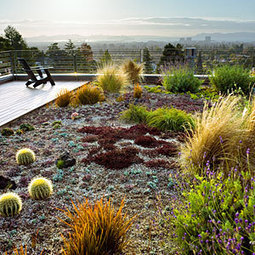 12 Great Drought-Tolerant Plants | Agriculture and the Natural World | Scoop.it