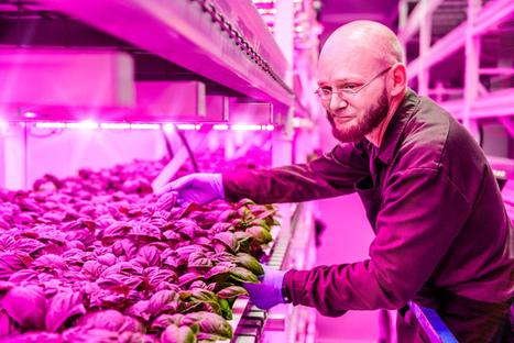 New Tech Sheds Light on the Future of Food - LiveScience.com | Aquaponics~Aquaculture~Fish~Food | Scoop.it