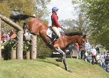 Tendon and Ligament Injuries in Horses .. Stem Cell Treatment is the Best way to treat Horses with an overstrain injury of the superficial digital flexor tendon. | Eventing | Scoop.it