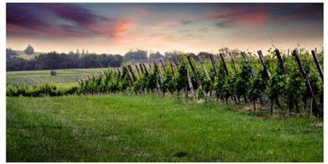 Une troisième interprofession voit le jour en #Aquitaine | Le Vin et + encore | Scoop.it