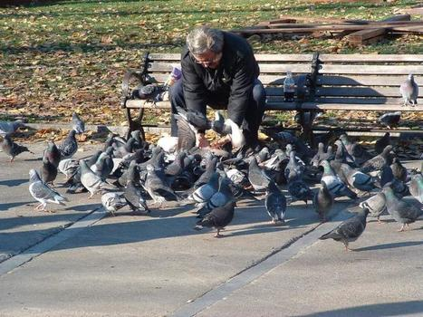Sometimes You Just Have to Feed the Pigeons | Who I Am, Who I'll Be | Scoop.it