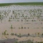 Gestion des risques en agriculture - Le ministère prépare une rénovation du dispositif pour juin 2014 - Agrisalon | Fruits et Légumes d'Aquitaine | Scoop.it