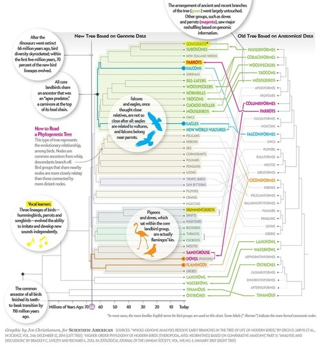 The Bird Family Tree Gets a Makeover | Science&Nature | Scoop.it