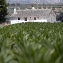 Les OGM sèment la discorde | Questions de développement ... | Scoop.it