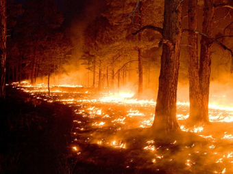 How climate change could wipe out Western forests | Sustainable Futures | Scoop.it