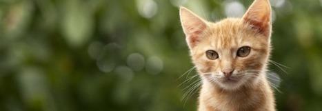 Insolite : un hôtel pour chats a ouvert à Marseille | Actu Tourisme | Scoop.it