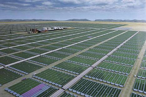 Le futur du pétrole se trouve dans les algues | Open source car | Scoop.it