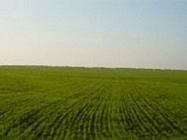 Weather center predicts reseeding 50% of winter crops in Ukrain   Plant Pest Modeling   Scoop.it