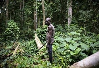 Who owns the land? Cameroon's large-scale land-grabs | Transformative Space | Scoop.it