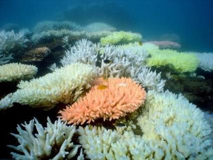 New plan to avoid dumping dredge waste on Great Barrier Reef | Sustain Our Earth | Scoop.it