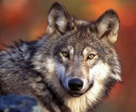 Who Really Are the Predators?   GarryRogers Biosphere News   Scoop.it