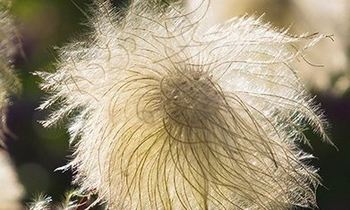 Gardens: yellow flowers for autumn - The Guardian | Macro Photography | Scoop.it