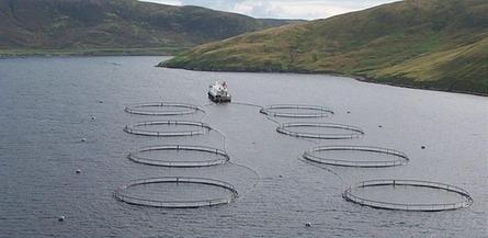 Scotland's Aquaculture | Home | Aqua-tnet | Scoop.it