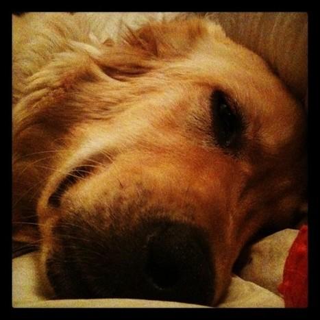 the anima of didi lenoir - dog nose (Taken with instagram)   Animal Cruelty   Scoop.it