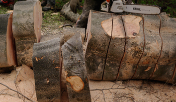 Fast and reliable tree surgeon in Glasgow | tree surgeon | Scoop.it