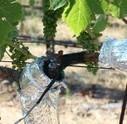 Les outils disponibles pour évaluer le déficit hydrique d'une vigne | Agriculture Nouvelle | Chimie verte et agroécologie | Scoop.it