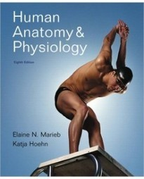 Test Bank For » Test Bank for Human Anatomy & Physiology, 8th Edition: Elaine N. Marieb Download | Anatomy & Physiology Test Bank | Scoop.it