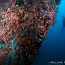Where There's Rust, There's Life | SCUBA | Scoop.it