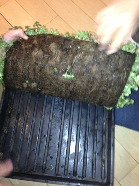 Green roof mat | Eco Brooklyn Inc. | Vertical Farm - Food Factory | Scoop.it