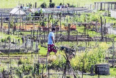 Abbotsford reaps lessons from community gardens | Wellington Aquaponics | Scoop.it