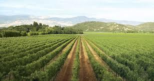 Sonoma Valley Wine Tour, Sonoma Wine Tour Limos, Sonoma County Wine Tours | Airport Transportation Services California | Scoop.it