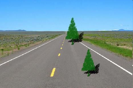 Tree_perspective_perception_optical_illusion.jpg (900x599 pixels) | I'm bored | Scoop.it