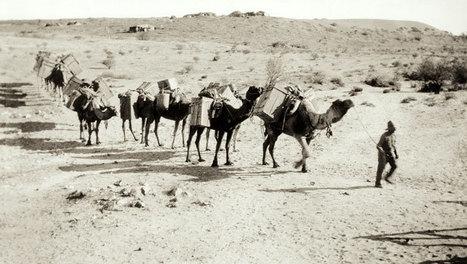 Australia's Afghan cameleers | Year 5 History: The Afghan Cameleers | Scoop.it