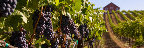 Romantic Premier Napa Valley Wine Tours starting at $595 | Travel | Scoop.it
