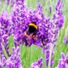 Help Save Our Beautiful Bees and Wildlife.Together we can make a difference.